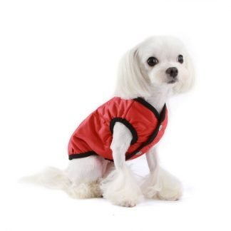 dog wearing everyday padded vest in red