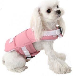 neon Life Vest on Poodle
