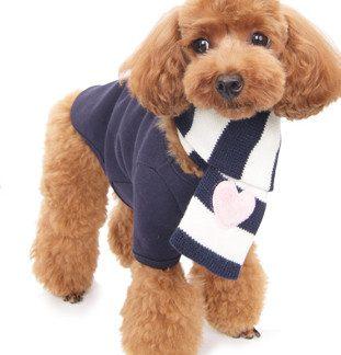 Basic Dog T-Shirt on dog