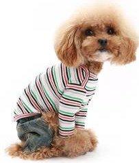 Rainbow striped t-shirt on dog
