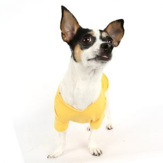 Everyday Dog T-Shirt on dog