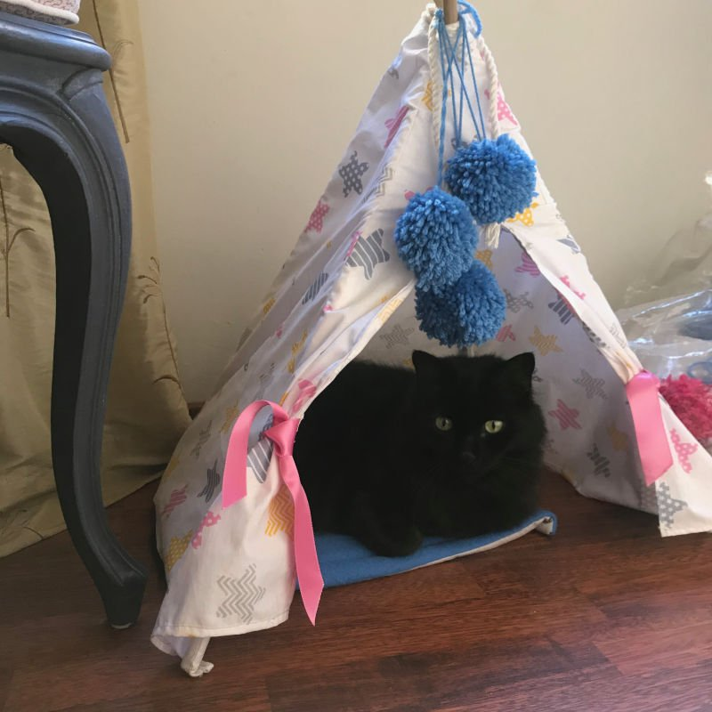 Ed sitting in the Bunny tent