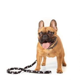 Dog Leads